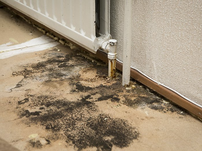 interruption a mold problem at commercial property