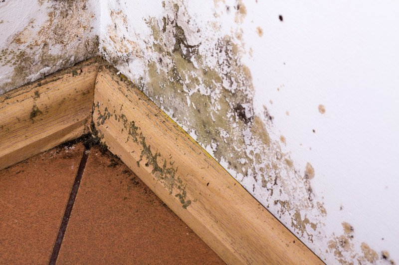 black mold testing and remediation