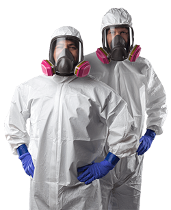 mold removal technicians