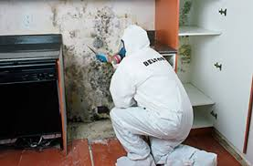 mould removal pro