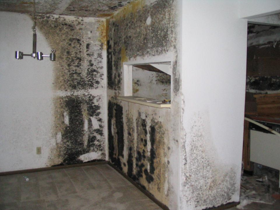 residential mold inspection testing