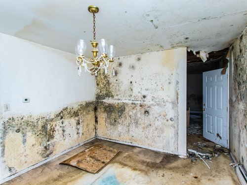 water damage mold remediation