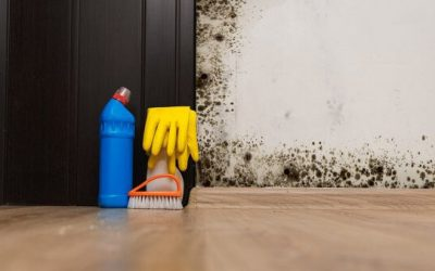 Can You Get Sick From Mold in Your House?