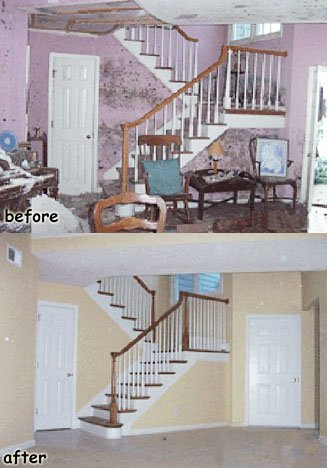 cleaning Mold services