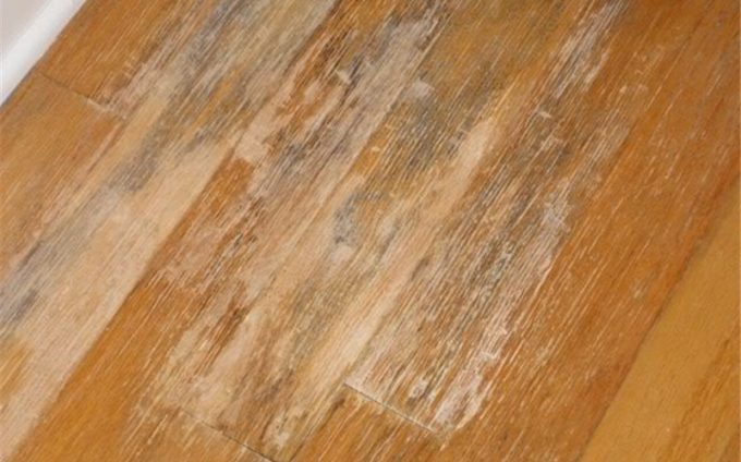 Wood Floor with mold