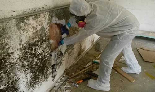 mold removal process in fort worth