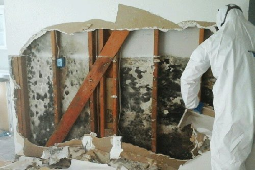house mold cleanup process