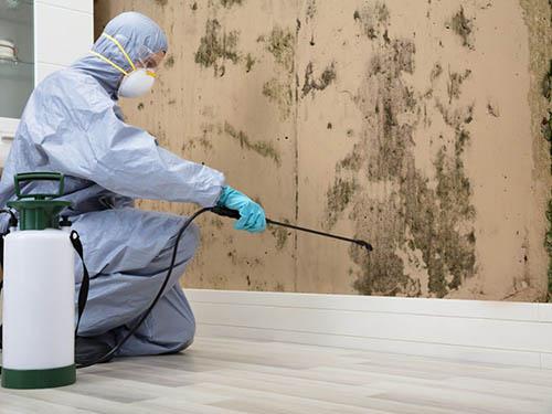 mold removal dallas
