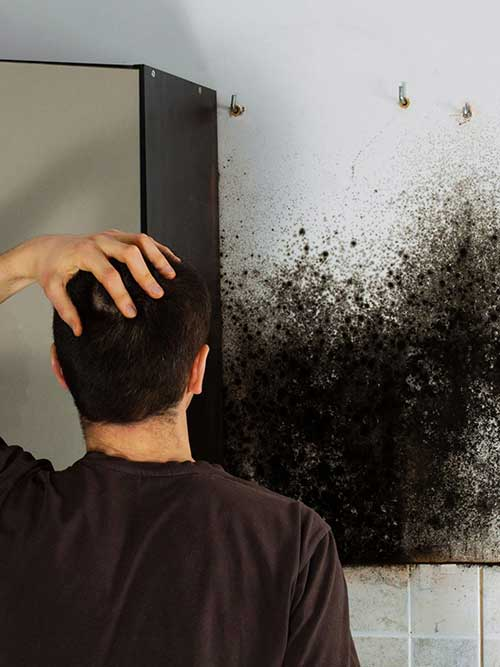 mold removal in austin texas