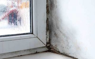 Best Mold Prevention Products for Your Home