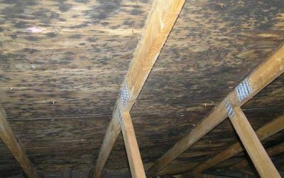 Causes For Attic Mold, How to Remove and Avoid it