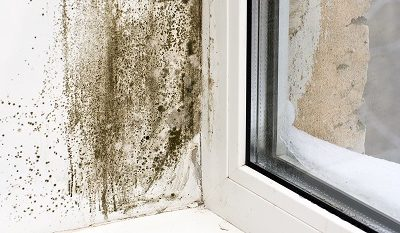 12 common types of mold in Homes